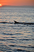 Stock photo royalty free image of a Fin Whale