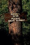 Suicidal Deer sign, near Fair Play, El Dorado County, California