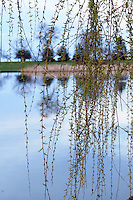 Stock photo: Delicate willow tree vine  hangs on a tree making a screen for the water of lake Milwaukee in Wisconsin, USA.