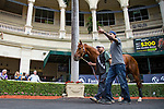 HALLANDALE BEACH, FL-JAN 25: Giant Expectations schools in the paddock in between races as horses prepare for the Pegasus World Cup Invitational at Gulfstream Park Race Track on January 25, 2018 in Hallandale Beach, Florida. (Photo by Kaz Ishida/Eclipse Sportswire/Getty Images)