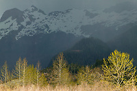 Alaska's 700,000 acre Copper River Delta is the largest wetlands complex on the Pacific coast of North America, and an ecosystem of almost unparalleled productivity, Chugach mountains, Cordova, Alaska