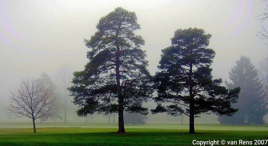Foggy Trees in Park setting