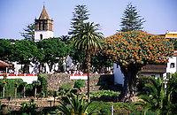 The famous 1000 years old dragon tree and the church San Marcos in Icod de los Vinos, Tenerife, Spain, Europe