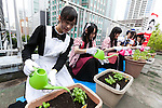 Akihabara maids pour water on plants at a rooftop garden in the Japan Agricultural Newspaper building in Akihabara on June 15, 2016, Tokyo, Japan. The annual event organised by NPO group Licolita sees maids and volunteers from local cafes and stores joining the Akihabara Vegetable Garden Project. This year 7 Akihabara maids planted habanero, peppermint, bhut jolokia and coriander. (Photo by Rodrigo Reyes Marin/AFLO)