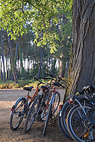 Parked mountain bikes leaning against a tree trunk.