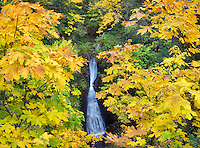 Shepperd's Dell waterfalls with fall colored maple trees. Columbia River Gorge National Scenic Area. Oregon
