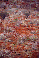 Desertification of Caatinga ecosystem, arid region, dry soil, Bahia State, Northeastern Brazil.