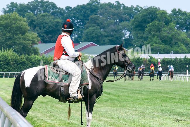 Willie at Delaware Park on 7/22/17