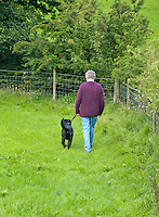 Man walking in the countryside next to a hedge with a black Labrador dog, Whitewell, Lancashire.