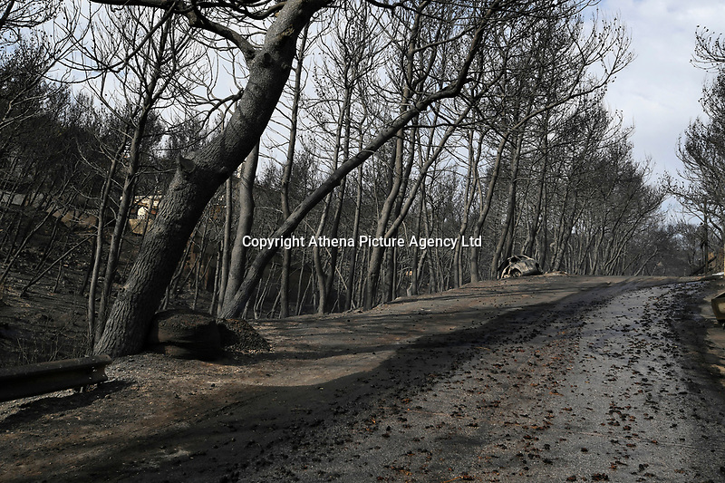 Pictured: Burned trees in the aftermath of the wild forest fires in the Neos Voutzas area near Rafina, Greece. Tuesday 24 July 2018<br /> Re: Deaths caused by wild forest fires throughout Greece.