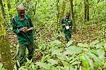 Anti-poaching snare removal team members, John Okwilo and Godfrey Nyesiga, noting animal sign in rainforest, Kibale National Park, western Uganda