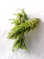 Fresh Rosemary herhs