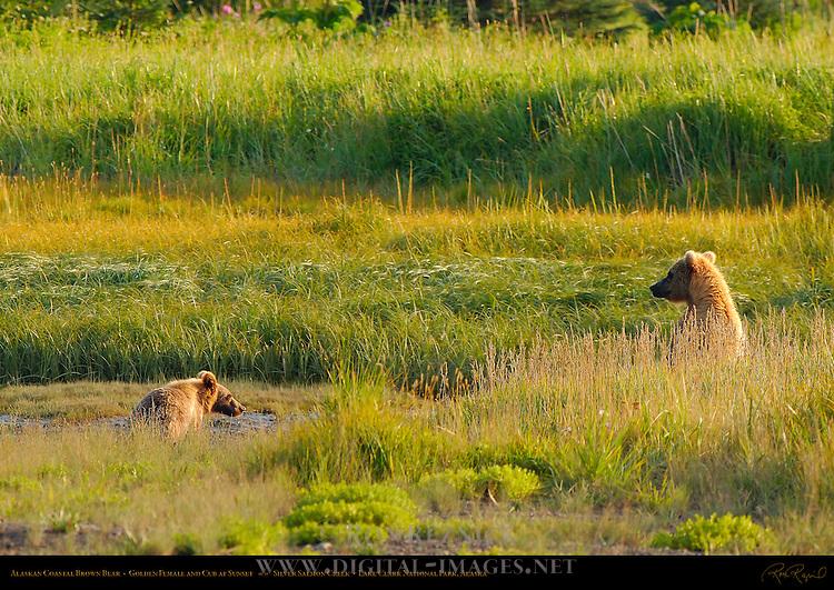 Alaskan Coastal Brown Bear, Golden Female and Cub, Silver Salmon Creek, Lake Clark National Park, Alaska