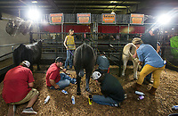 NWA Democrat-Gazette/BEN GOFF @NWABENGOFF<br /> Members of the Centerton 4-H club groom their heifers for the beef showmanship event Thursday, Aug. 8, 2019, during the Benton County Fair in Bentonville.