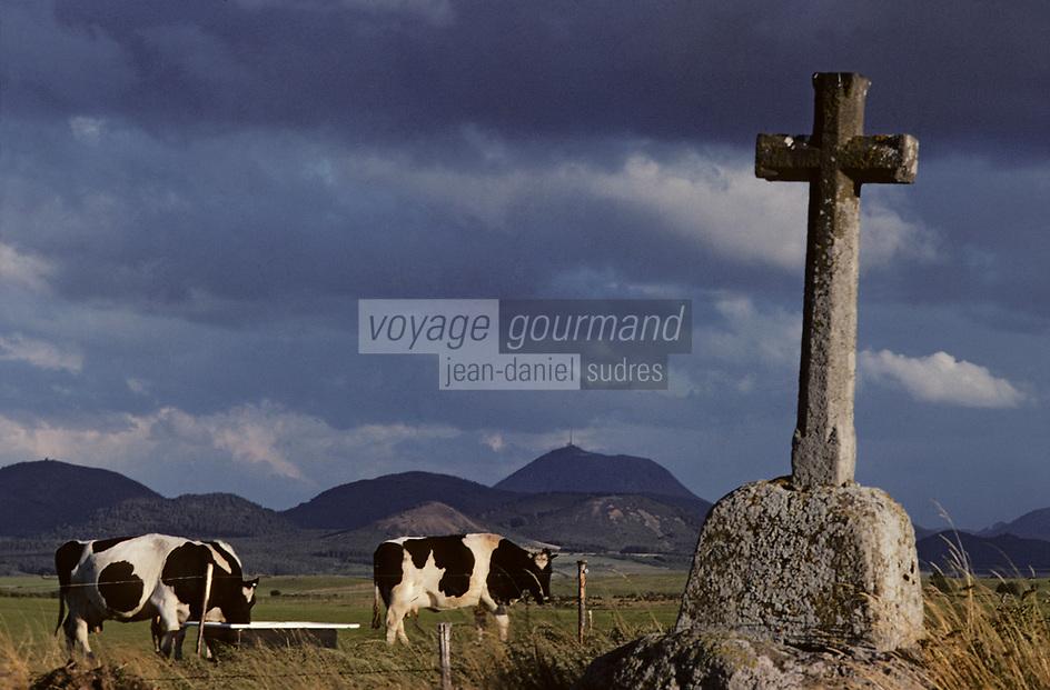 Europe/France/Auvergne/63/Puy-de-Dôme/Parc Naturel Régional des Volcans/Monts Dômes: Le Puy-de-Dôme (1465 mètres) et vaches en pâturage