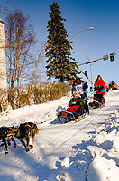 Misha Wiljes run past spectators and down the Cordova Street hill with an Iditarider in the<br /> basket and a handler during the Anchorage, Alaska ceremonial start on Saturday March 4th<br /> during the 2017 Iditarod race. Photo  @2017 by Kristie Lent/SchultzPhoto.com