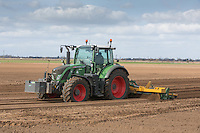 Bed forming ready for planting Gladioli bulbs in the Lincolnshire Fens<br /> Picture Tim Scrivener 07850 303986