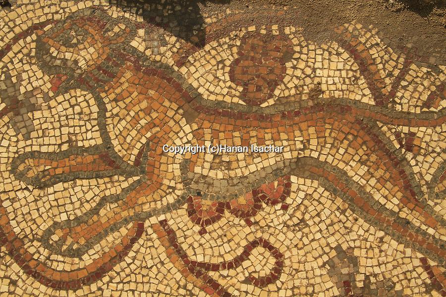 Israel, Shephelah, the mosaic floor at the Byzantine Church in Beth Loya, a Tiger