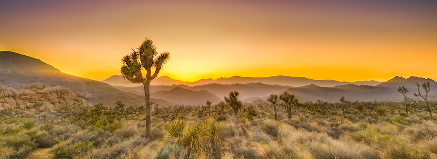 joshua tree, sunset, desert