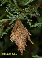 LE23-500z  Common Bagworm hanging from tree, larva of moth with surrounding case, Thyridopteryx ephemeraeformis