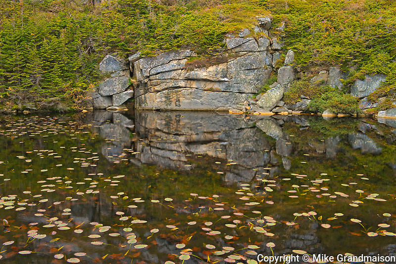 Waterlilies at edge of poond<br />