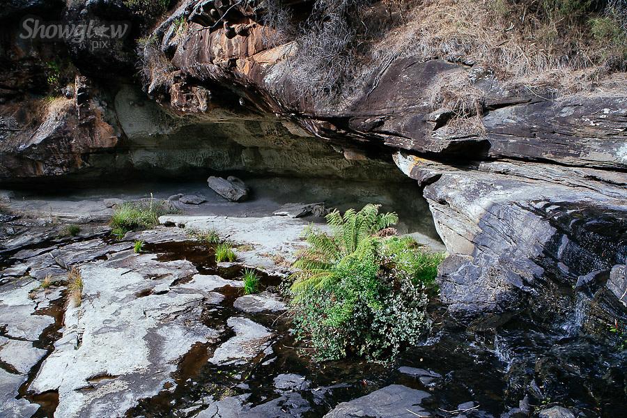 Image Ref: CA278<br /> Location: Sheoak Hike, Great Ocean Road<br /> Date of Shot: 26.04.18