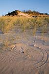 dune, Indiana Dunes State Park, Indiana
