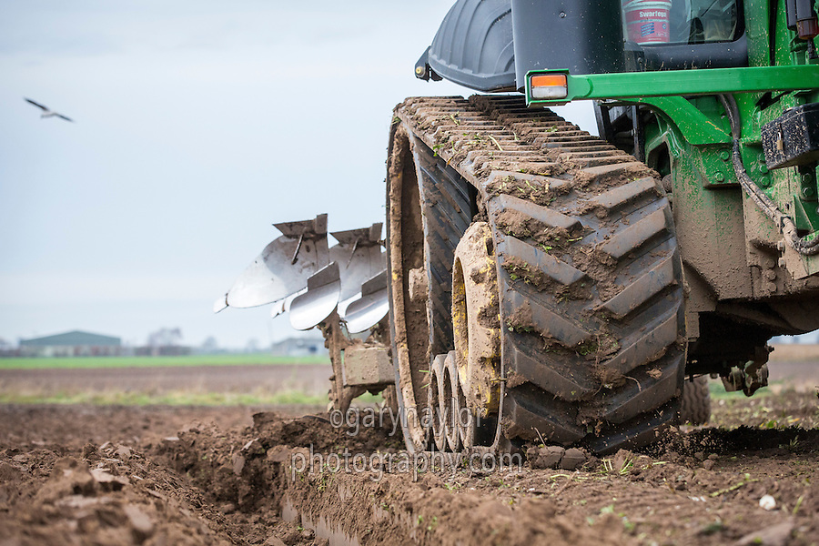 Ploughing sugar beet land ready for wheat drilling - Lincolnshire; December