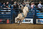 Ryan Miller attempts EB1 Fast Talker of Davis Rodeo Ranch during the first round of PBR Blue Def Tour event in Wheeling, WV - 3.18.2016. Photo by Christopher Thompson