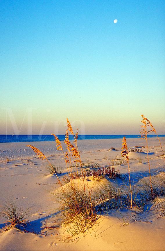 Deserted beach on Gulf of Mexico. ocean, coast, seashore, plants, scenic. Gulf Shores Alabama United States.