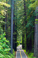 The Avenue of the Giants, Humboldt Redwoods State Park, California