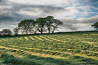 Hay field at Forden, Powys, Wales,