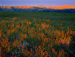 Zumwalt Prairie Preserve, OR  <br /> First light touches bunchgrass prairie grasses on Long Ridge with Camp Creek canyon in the distance A Nature Consevancy Preserve, Wallowa County