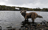 one of the island dogs waits for a stone to chase - at the World Stone Skimming Championships which attracted over 300 entries from all round the world - Easdale is reached by a small open ferry-boat from the Isle of Seil - south of Oban - picture by Donald MacLeod - 25.9.11 - clanmacleod@btinternet.com 07702 319 738 donald-macleod.com