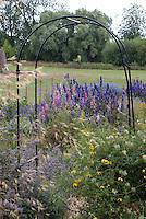 Flower cutting garden, trellis, delphinium larkspur, clematis, garden use