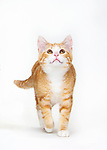 Daily Dose - January 17, 2019 - Things are Looking Up - Orange Tabby Cat - Delany<br />