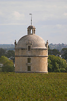 Vineyard. On the terrasse. View towards Ch Latour. Chateau Pichon Longueville Comtesse de Lalande, pauillac, Medoc, Bordeaux, France