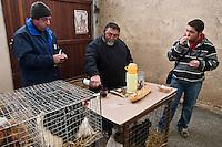Europe/France/Midi-Pyrénées/32/Gers/Samatan: Marché aux volailles vivantes - les éleveurs lors de la pause: Casse-croute