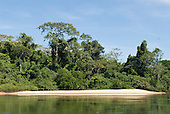 Pará State, Brazil. Xingu River; sandy beach with rainforest.