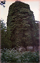 19/10/14 <br /> <br /> Collect photo showing the church covered in ivy in 1992 after Bob's wife discovered it.<br /> <br /> How one man&rsquo;s twenty-two year crusade to save a derelict church was bedeviled with problems but proved to be anything but folly.<br /> <br /> An Anglo Saxon church where unique ancient wall paintings were uncovered will soon begin the next phase of restoration . Church Warden, Bob Davey, 85 still opens the church to visitors every day and continues to oversee the restoration.<br /> <br /> Full copy here:<br /> <br /> http://www.fstoppress.com/articles/bob-davey-st-marys-church/<br /> <br /> All Rights Reserved - F Stop Press.  www.fstoppress.com. Tel: +44 (0)1335 300098