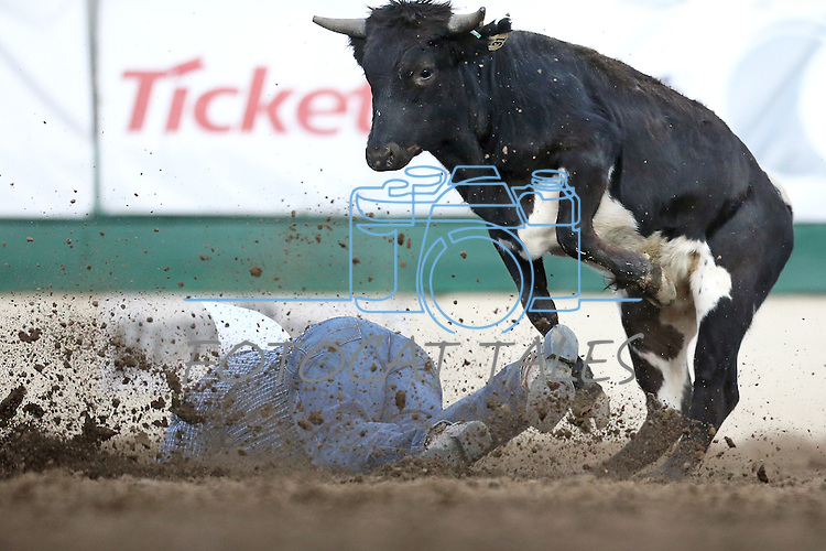 A steer jumps over Darrell Petry during the steer wrestling competition at the Reno Rodeo in Reno, Nev. on Friday, June 19, 2015.<br /> Photo by Cathleen Allison/Nevada Photo Source
