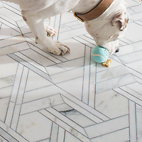 Taylor the English Bulldog plays fetch on a New Ravenna Hector Grand floor.