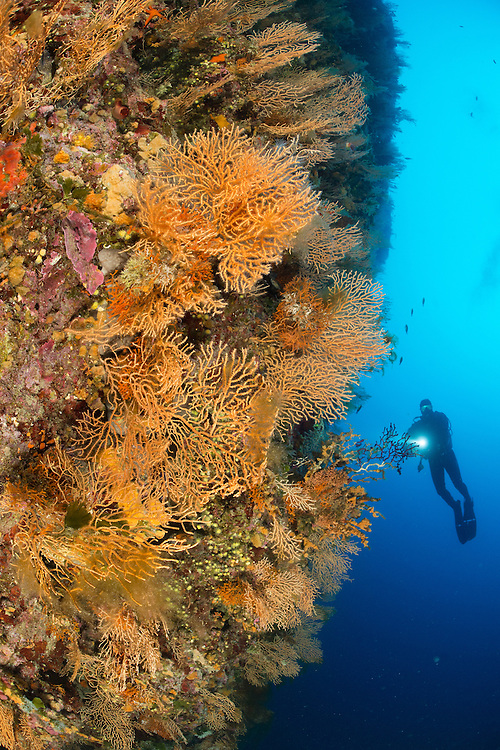 Divers exploring the colourful sea fam covered walls of Stupiste - Vanjska Sika on Vis Island