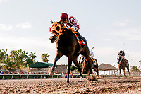 """HALLANDALE BEACH, FL - JULY 01:  #7 Curlin's Approval ridden by jocley Luis Saez wins the Breeders Cup """"Win and You're In"""" Princess Rooney Sprint(G2) at Gulfstream Park. Hallandale Beach, FL. (Photo by Arron Haggart/Eclipse Sportswire/Getty Images)"""