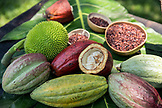 BELIZE, Punta Gorda, Toledo, guests can participate in a Bean to Bar Chocolate Making Class where they'll participate in the entire process of transforming high-quality organic cacao into chocolate, Belcampo Belize Lodge and Jungle Farm