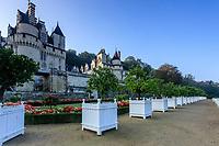 France, Indre-et-Loire (37), Rigny-Ussé, château et jardin d'Ussé en octobre, les bacs d'agrumes sur la terrasse supérieure et le jardin à la française