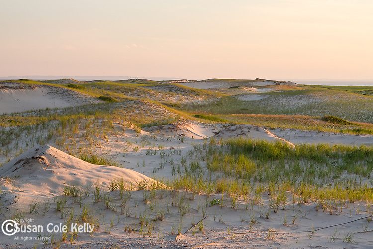 Sand dunes at Race Point Beach, Cape Cod National Seashore, Provincetown, Massachusetts, USA