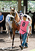 RB Champagne Taste before The Arabian Diamond State at Delaware Park racetrack on 6/7/14