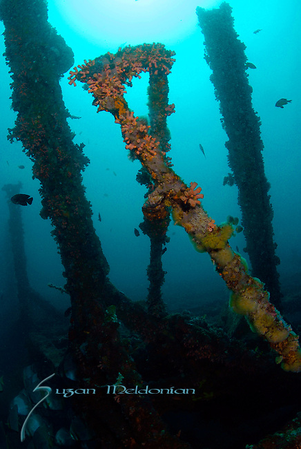 Wreck of the Darylau WA, Anilao; Batangas; Philippines