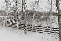 snow covered fence row.